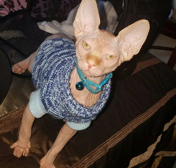 Sphynx Breeder Reviews